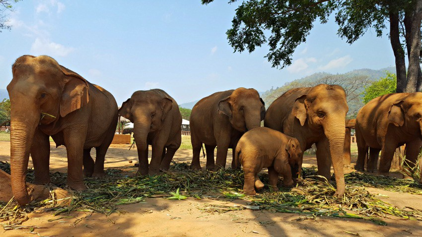 // Featured Charity // Elephant Nature Park