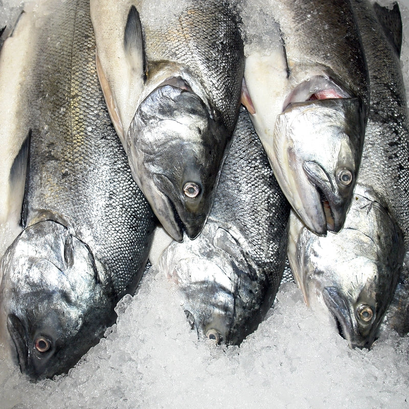 5 Types of Salmon in Alaska