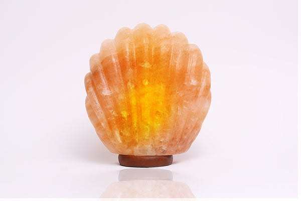 Sea Shell Salt Lamp