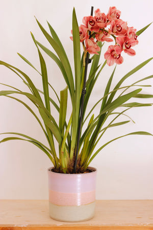 Planter | 19cm | Pink-Purple