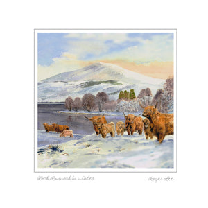 Highland Cattle in Winter - Rogerleeart