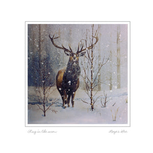 Stag in Winter - Rogerleeart