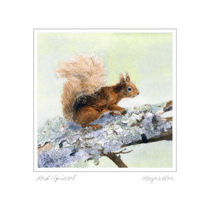 Red Squirrel - Rogerleeart