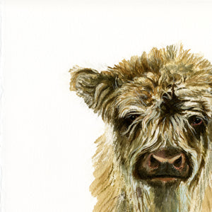 Young Highland Cow - Rogerleeart