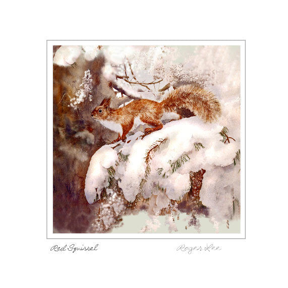 Red squirrel in the snow - Rogerleeart
