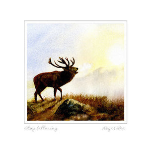 Stag Bellowing