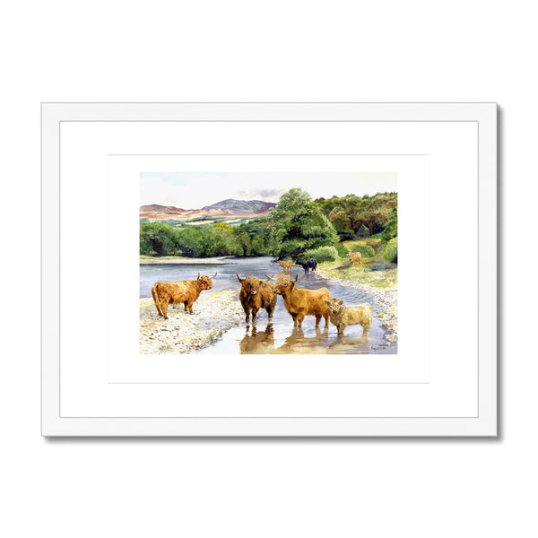 Framed & Mounted Print of Highland Cattle in the River Tummel, Perthshire, Scotland. - Rogerleeart