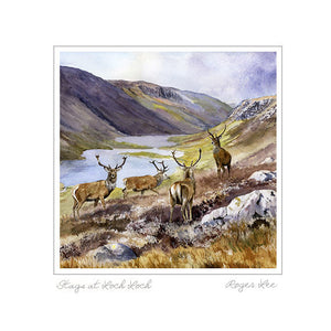 Stags at Loch Loch - Rogerleeart