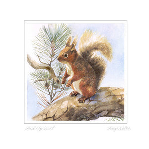 Red Squirrel Standing - Rogerleeart