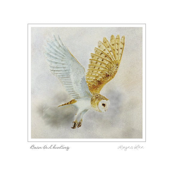 Barn Owl Flying (W) - Rogerleeart