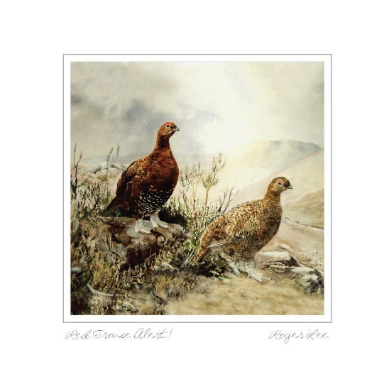 Red Grouse Alert - Rogerleeart