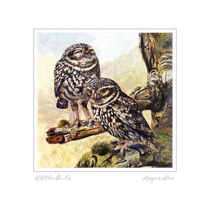 Little owls - Rogerleeart