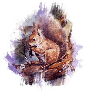 Red squirrel brushstroke range