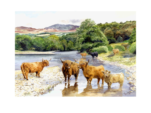 Highland Cattle in the River Tummel wildlife print - Rogerleeart