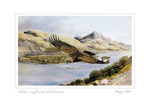 Golden eagle over Loch Maree (w) - Rogerleeart