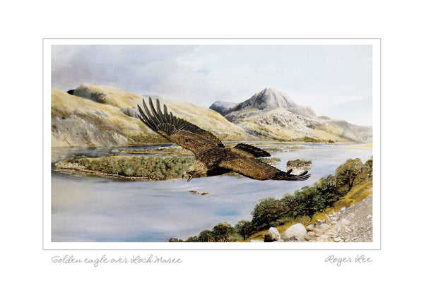 Golden eagle over Loch Maree Landscape Range - Rogerleeart
