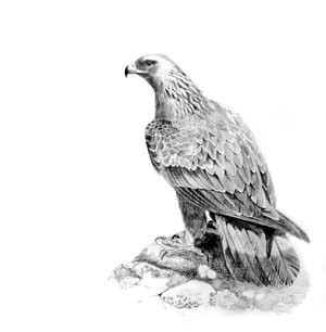 Golden eagle graphite range - Rogerleeart