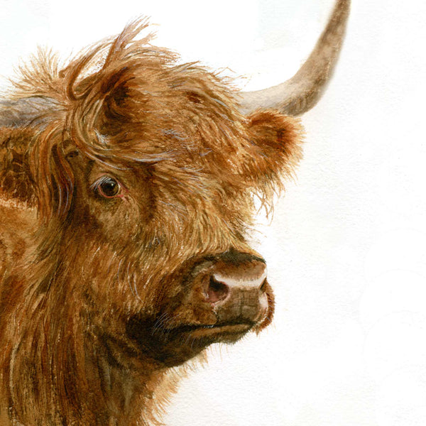 Highland cow head painted by Roger Lee on a greetings card