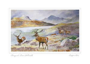 Stags at Stac Pollaidh, Landscape Range