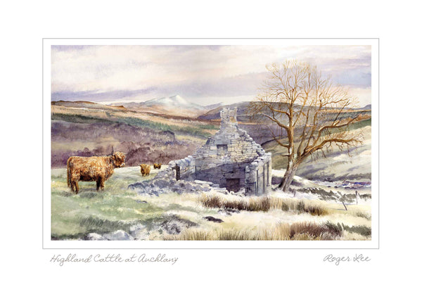 Highland Cattle at Auchlany, Scotland , Landscape Range