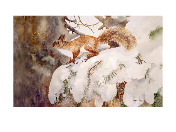 Red Squirrel in snow wildlife art print - Rogerleeart