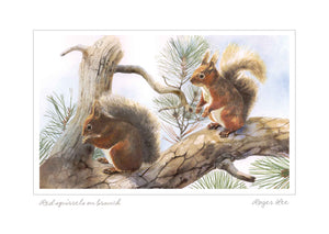 Red Squirrels on branch (W) - Rogerleeart