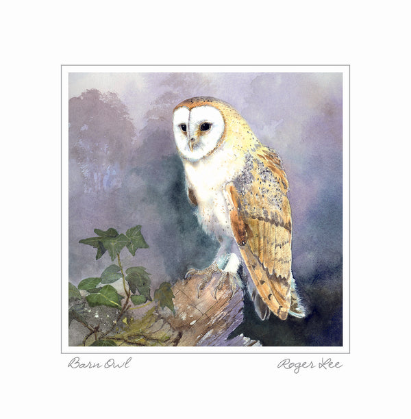 Barn Owl greetings card - Rogerleeart