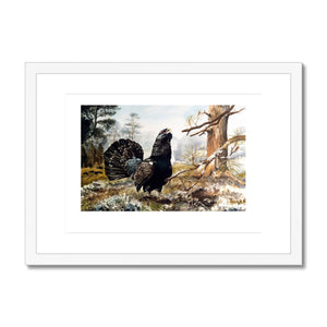 Framed & Mounted Print of Capercaillie - Rogerleeart