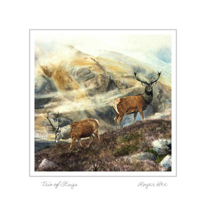 Stags in a misty glen