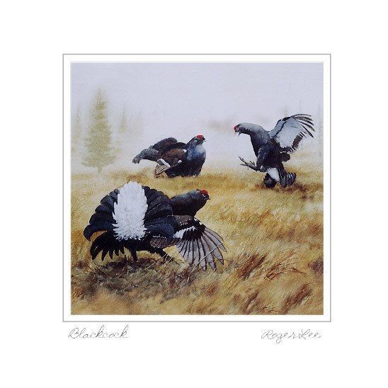 Black Grouse - Rogerleeart