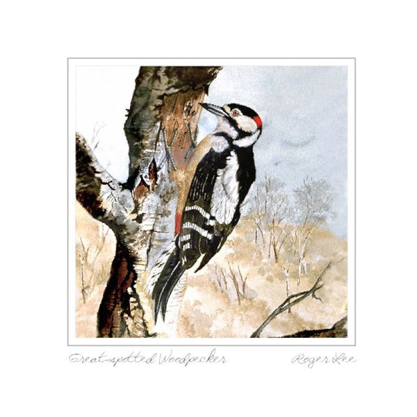 Great Spotted Woodpecker - Rogerleeart