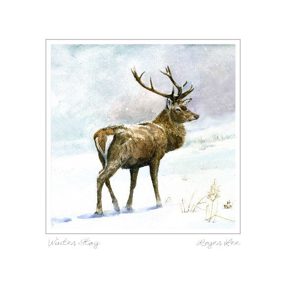 Stag in Snow - Rogerleeart