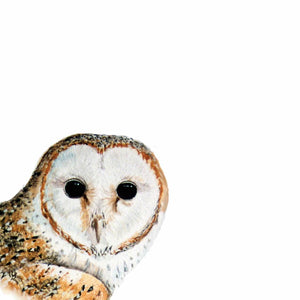 Barn Owl (Window range) W - Rogerleeart