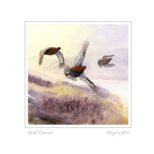 Red Grouse Flying