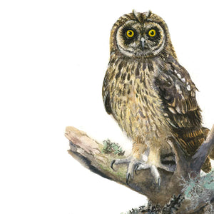 Short Eared Owl window range - Rogerleeart