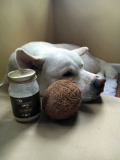 Coconut Oil and Your Dog