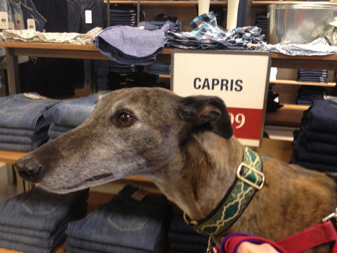 In a clothing store at the Greyhounds in Gettysburg annual event.