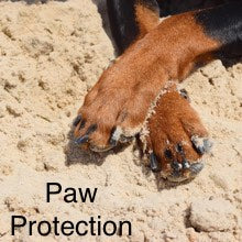 Paw Protection