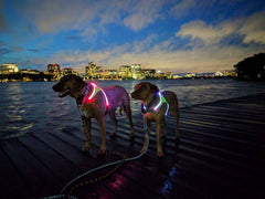 Lighted Dog Harness