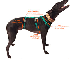 Escape-Proof Dog Harness