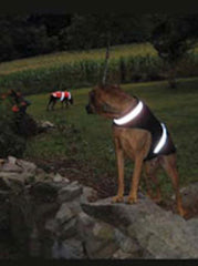 Corky's Reflective Dog Jacket