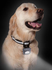 Puplight lighted dog collar