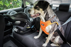 Sleepypod Clickit Terrain dog harness for the car