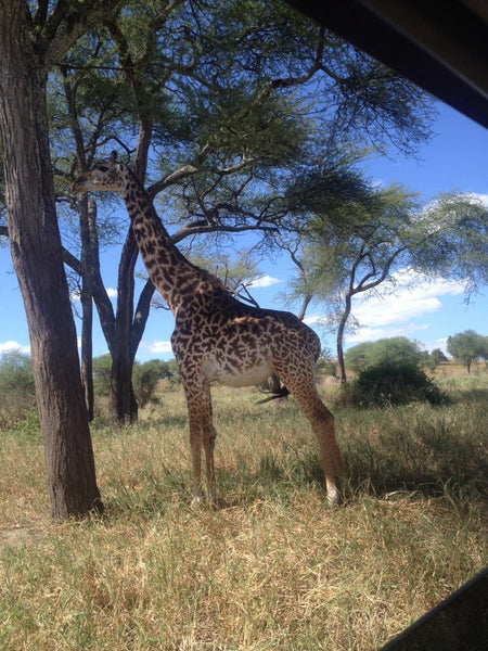 Tarangire National Park Day Trip