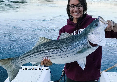 eastcoastangler striped bass striper canada saint john new brunswick saint john river reversing falls