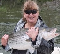 Eastcoastangler East Coast Angler Striped Bass Striper NB Saint John Canada Cruise Reversing Falls Saint John River Kennebecasis Bay of Fundy Sturgeon Bass Atlantic Canada Maritimes Fishing Charter Guide Charter Boat