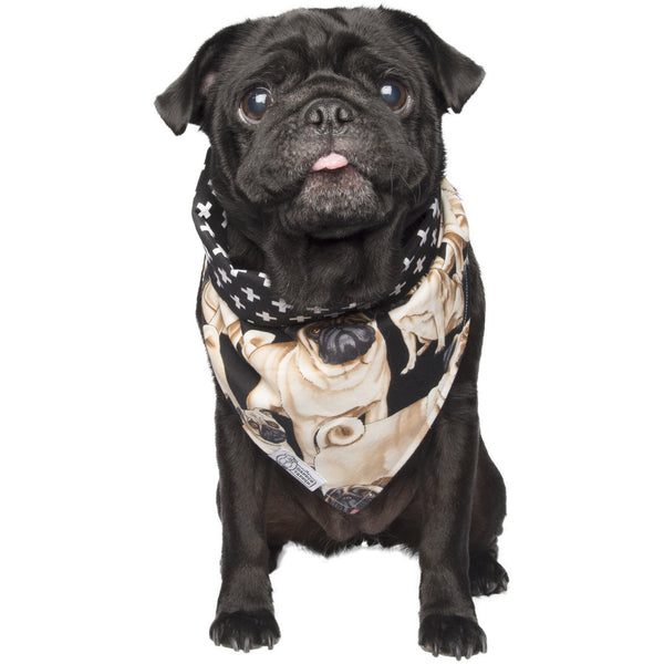 Pugs Bandana - The Dapper Yapper