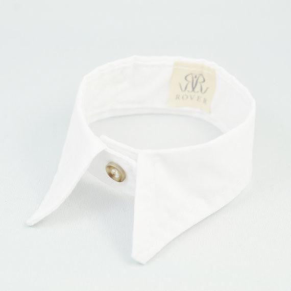 White pointed collar - The Dapper Yapper