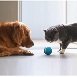 Cheerble Wicked Ball - A 100% automatic ball for Dogs and Cats