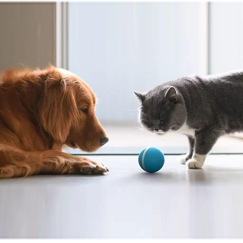 Cheerble Wicked Ball - A 100% automatic ball for Dogs and Cats - Cheerble in Malaysia - Storming Gravity